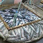 https://usatruckloadshipping.com/wp-content/uploads/2020/09/truckload-shipping-from-alaska-to-washington-salmon.jpg