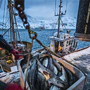 Seafood Truckload Shipping from Alaska