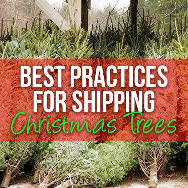 best-practices-for-shipping-christmas-trees