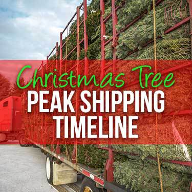 Christmas Tree Peak Shipping Timeline